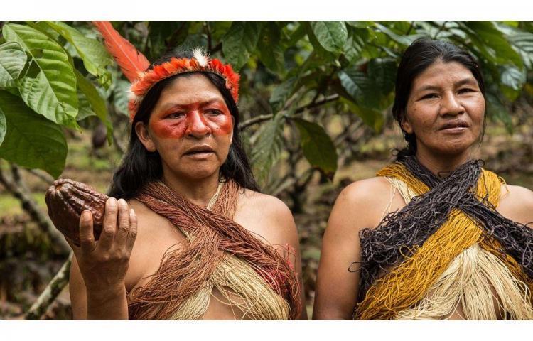 Producción de cacao superará las expectativas