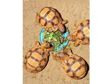 Incautación récord de tortugas en Madagascar