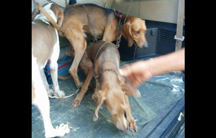 Rescatan perros