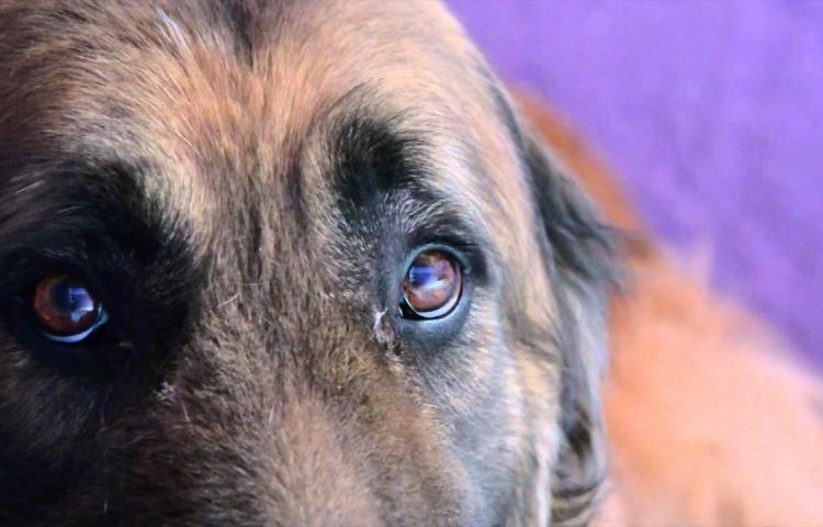 Muerte de perro desata indignación en Paraguay tras imágenes divulgadas