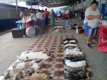 Spay realiza gran jornada de esterilización en San Miguelito