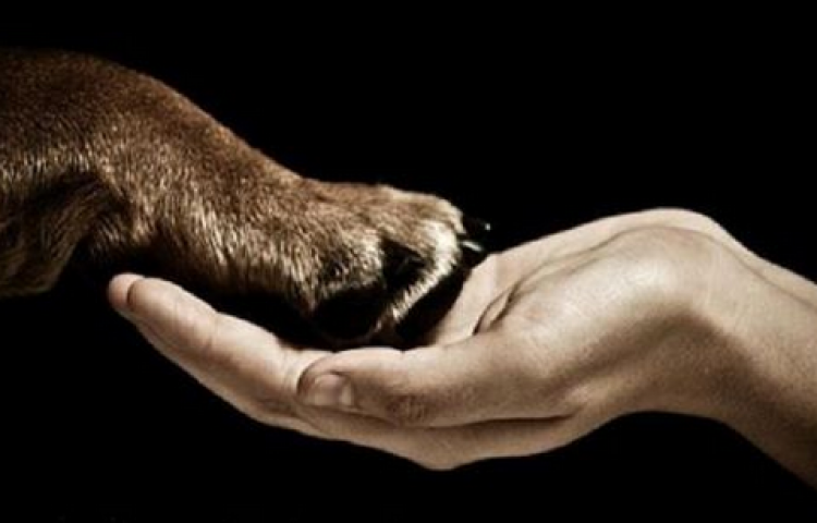 Acusan a empleado de Universidad de EEUU de bestialidad por sodomizar a perro