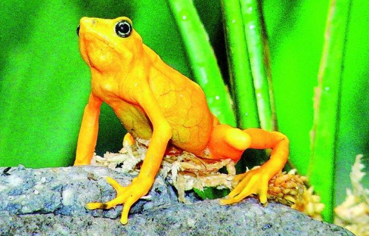 50 especies nativas en peligro