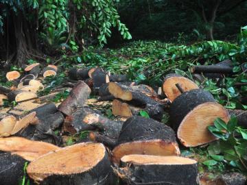 Se reforestan 8.29% hectáreas de árboles