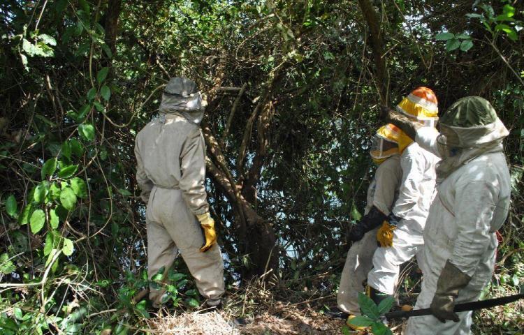 Las abejas africanizadas movilizan a los bomberos
