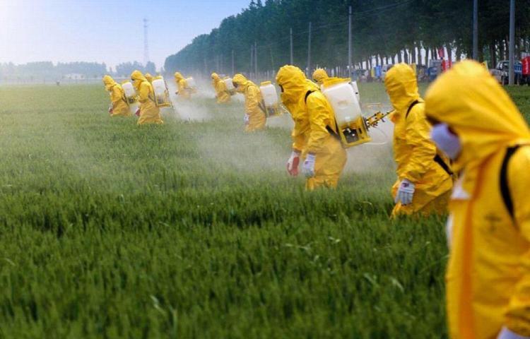Unos 34 intoxicados por pesticida en Chile