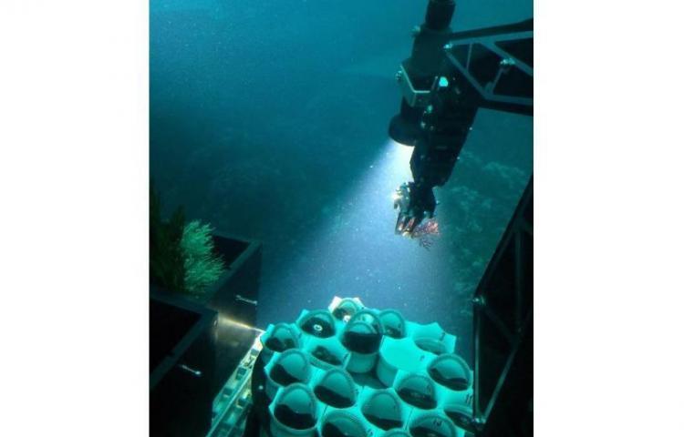 Descubren una nueva especie de coral en Coiba