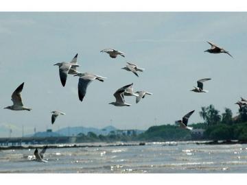 Panamá se sumará a la celebración del Día Mundial de las Aves Migratorias