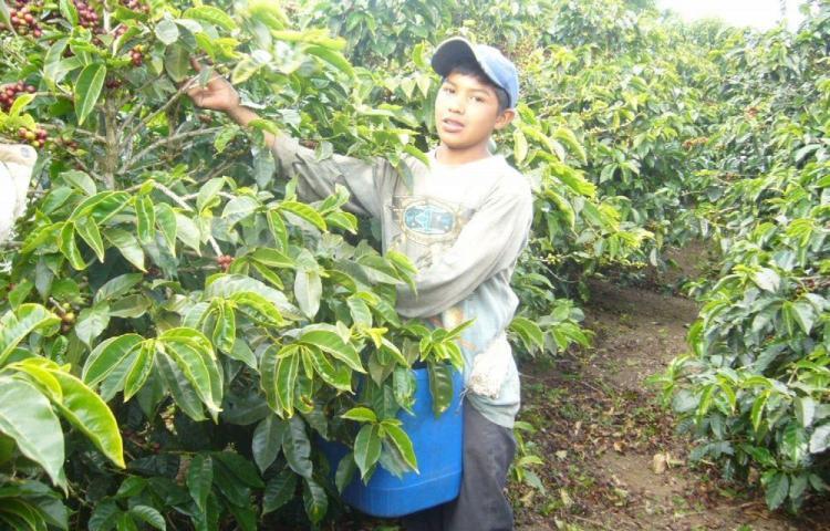 Refuerzan prevención del trabajo infantil