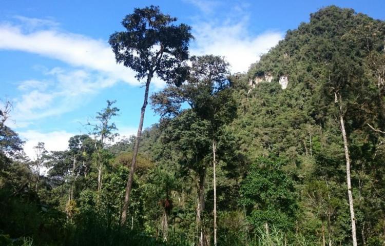 Perú crea reserva natural privada con 41 especies de orquídeas en la Amazonía