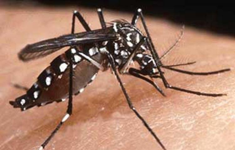 Hay más de 2 mil 800 casos de dengue en todo el país