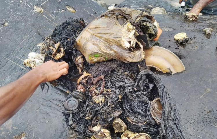Hallan ballena muerta con 6 kilos de plástico en el estómago en Indonesia