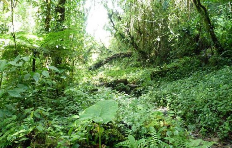 Científicos identifican en Panamá unas 16 nuevas especies de flora y fauna
