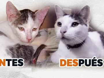 Adoptar, salva vidas