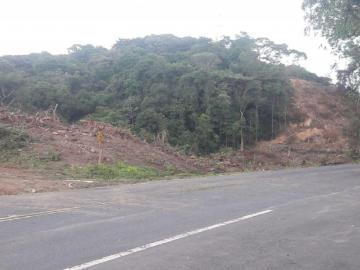 Protestarán hoy por la deforestación de bosques de las áreas canaleras