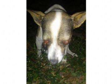 Le sacaron los ojos a un perro con fuegos artificiales