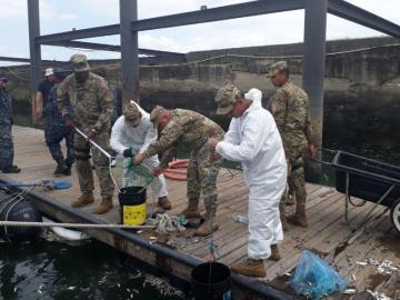 'Mortandad de peces se debe a exceso de algas en Amador'