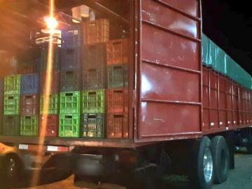 Detectan cargamento de mangos de contrabando