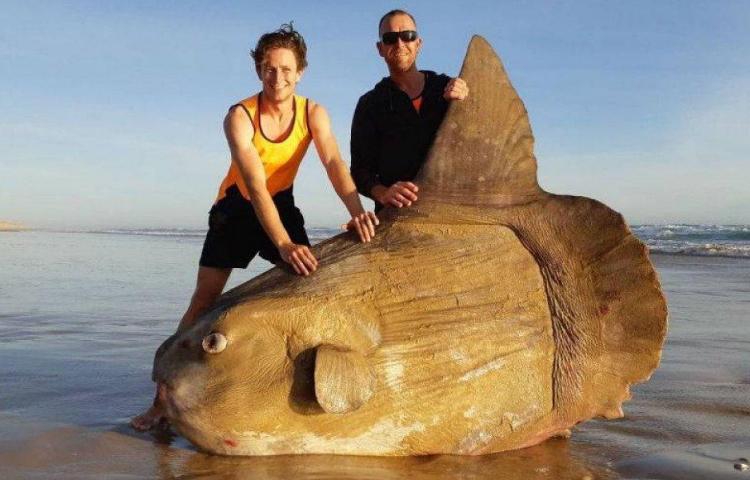 Encuentran un pez raro varado en una playa de Australia