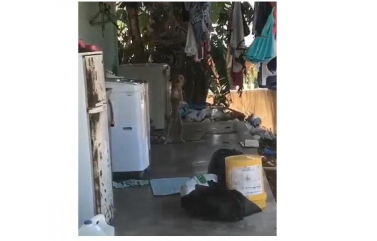 Buscan solución a caso de maltrato animal en Arraiján, perros están en desnutrición