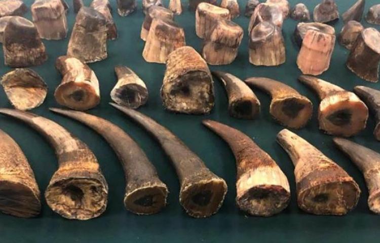 Hong Kong intercepta un cargamento récord de cuernos de rinoceronte