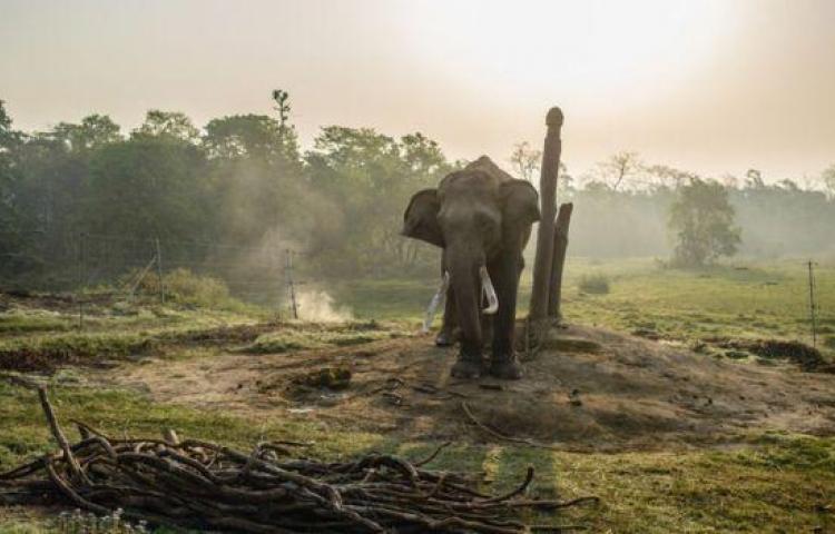 Cazadorfue aplastado por un elefante y devorado por leones