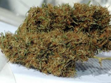 El uso medicinal del cannabis en Panamá lucha contra el tiempo y el Gobierno