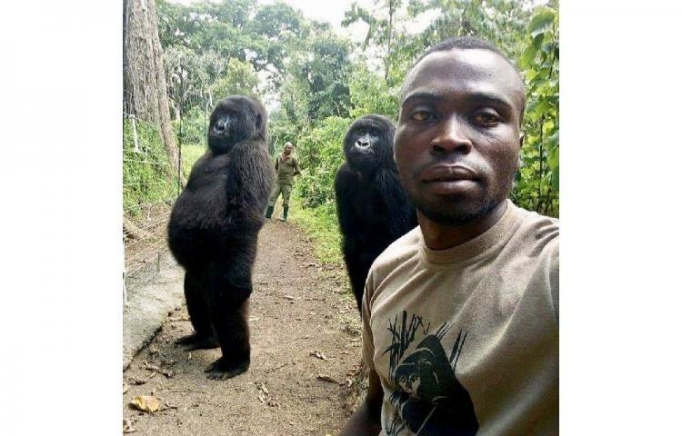 La curiosa selfie de dos gorilas y sus guardabosques