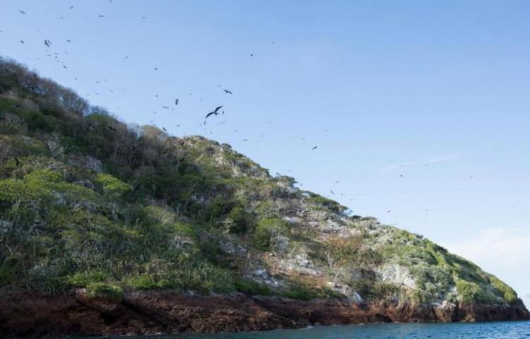 Asamblea estudiará proteger isla Boná