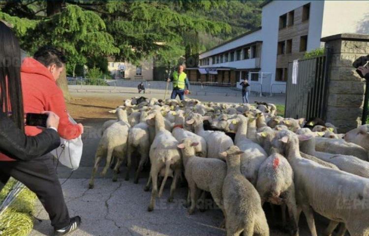 Inscriben a ovejas en escuela para evitar cierre de clase