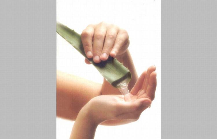 Convierta la sábila en el tratamiento de su cabello
