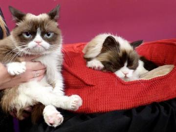 "Muere la ""gata gruñona"", una diva de internet"