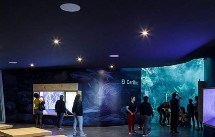 Biomuseo de Frank Gehry inaugura galerías sobre ecosistema marino de Panamá