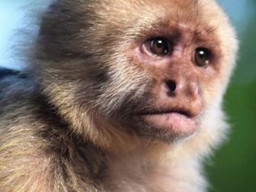 Proyecto de estudio de primates busca la conservación de la especie