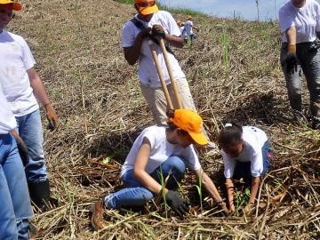 Miles de voluntarios en jornada de reforestación este 22 de junio