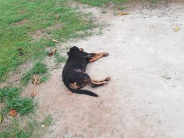 Preocupación por envenenamiento de perros y gatos