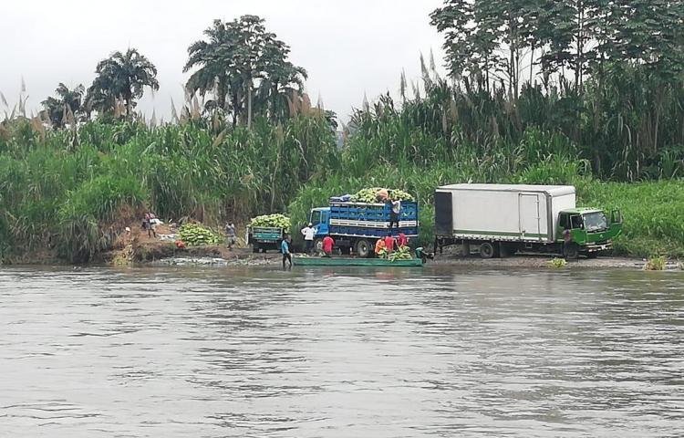 Productores de plátanos denunciancontrabando proveniente de Costa Rica