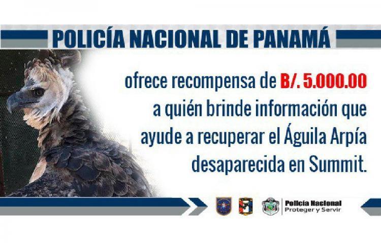Ofrecen recompensa por información del águila harpía robada