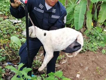 Agentes de la Policía Nacional rescatan a una perrita de morir en una fosa