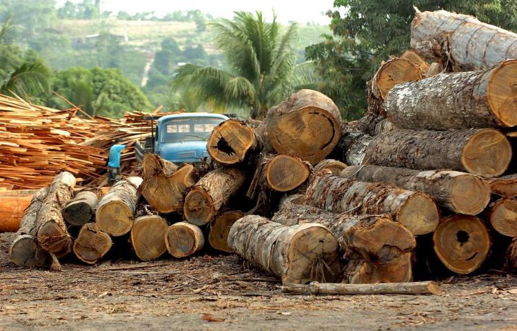 Brasil envía a la policía de elite a la Amazonía para combatir deforestación
