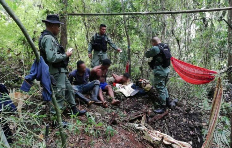 Detuvieron a tres personas por talar madera de Cocobolo