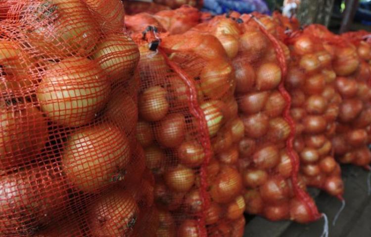 Gobierno autoriza importación de 60 mil quintales de cebolla