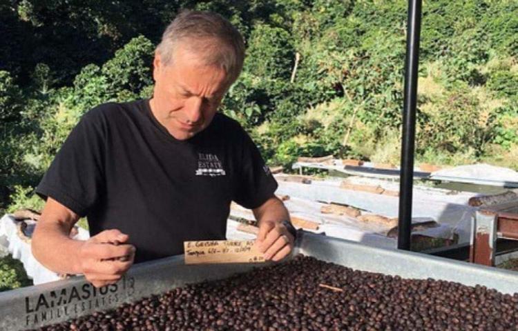 Café panameño es vendido en más de mil dólares la libra