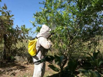 Bomberos atendieron más de cinco mil casos de abejas africanizadas
