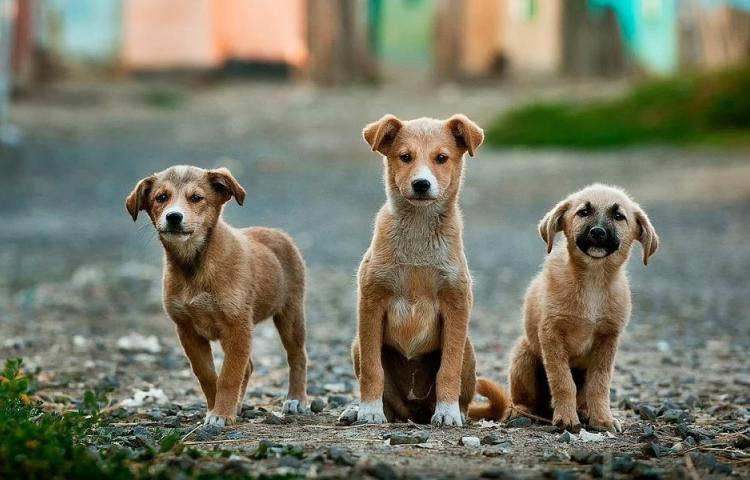 Hoy es el Día Mundial del Perro