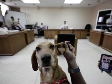 Campeón, el perro convertido en símbolo contra el maltrato animal