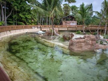 El Miami Seaquarium invita a interactuar con tiburones y mantarrayas