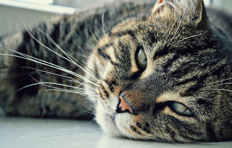 ¿Por qué hoy se celebra el Día Internacional del Gato?
