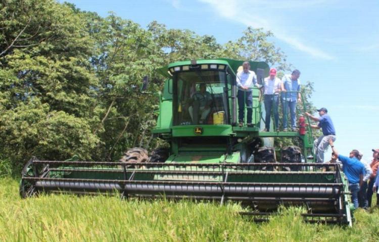 Gobierno asegura que hay suficiente arroz en el país y no habrá importación