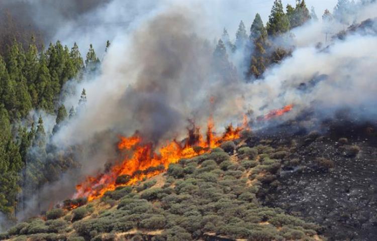 Incendio forestal quema más de mil hectáreas en isla española de Gran Canaria